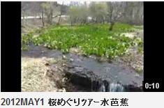 2012MAY1 桜めぐりツアー水芭蕉