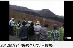 2012MAY1 桜めぐりツアー桜峠