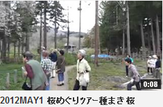 2012MAY1 桜めぐりツアー種まき桜
